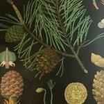 PRETTY BLUE FLORAL